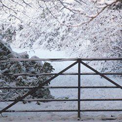 Four Seasons at Godminster - Winter