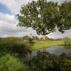 Pond at Godminster Farm with tree behind