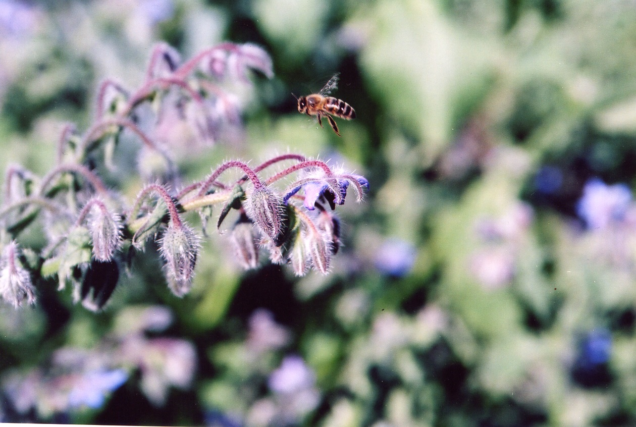 Bees and nature at Godminster farm